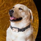 Gps Localizador Para Mascotas, Perros Cachorros, Gatos