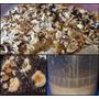 Alimento Vivo Grindal Cucarron Microgusano