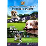Colegio Guardería Canina