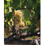 Poster (74 X 91 Cm) Chardonnay Grapes In Vineyard Carneros