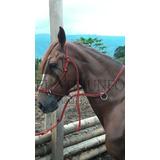 Jaquimon Corrector, Horse Halter Cabezal Caballos Sierra