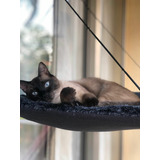 Hamacas De Ventana Para Gatos- Camas Personalizadas