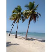 Venta De Lote Frente Al Mar En Primera Linea De Playa. Playa