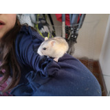 Hamster Rusos Bio Y Felices