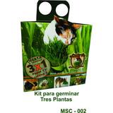 Pasto Gatos / Kit Semillas Germinar 3 Plantas - Digestiva