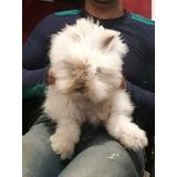 Conejos Teddy