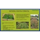 Plántulas Arboles Arbolitos Plantas Forestales