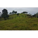 Finca Ebejico Antioquia Aguacate Hass - Avocado Farm