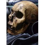 Artesanía Cráneo / Calavera Humana Skull Realista Halloween