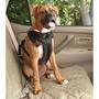Mascotas Vehículos Arnés De Seguridad S