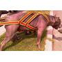 Arnes De Arastre De Peso Para Perros Deportivos
