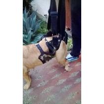 Arnes Para Perros Con Paralisis