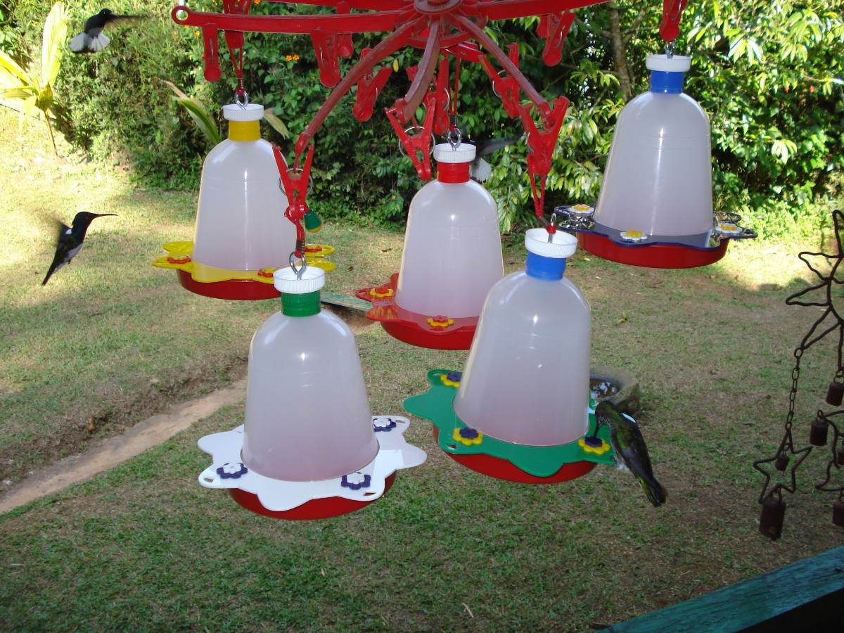 Кормушка для птиц своими руками фото из пластиковых