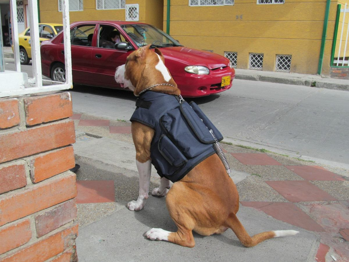 Chaleco para perro imagui for Chalecos para perros