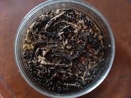 **cucarron O Escarabajo Del Mani Alimento Vivo Para Peces**