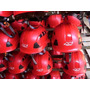 Casco Alpen Ventilado Proair Rojo Certificado Para Alturas